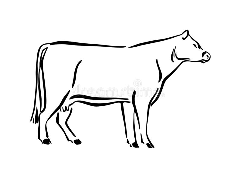 Cow Drawing Stock Illustrations – 13,633 Cow Drawing Stock