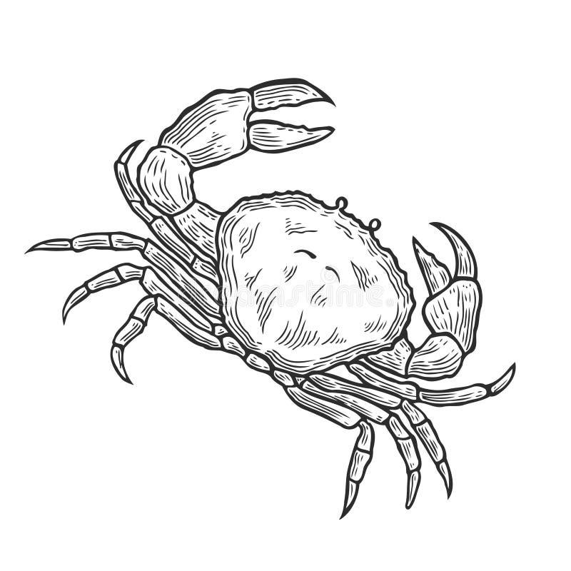 Crab Hand drawn. Hand drawn Crab seafood nature ocean aquatic underwater vector. Marine engraving Sea animalillustration on white background vector illustration