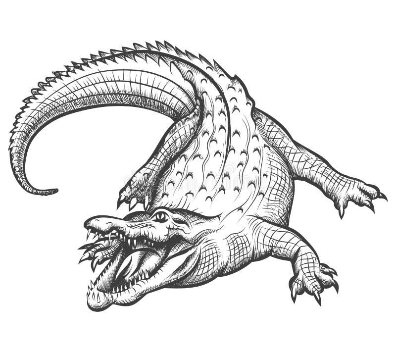 Hand drawn crocodile. Alligator animal, predator reptile with open mouth, vector illustration royalty free illustration