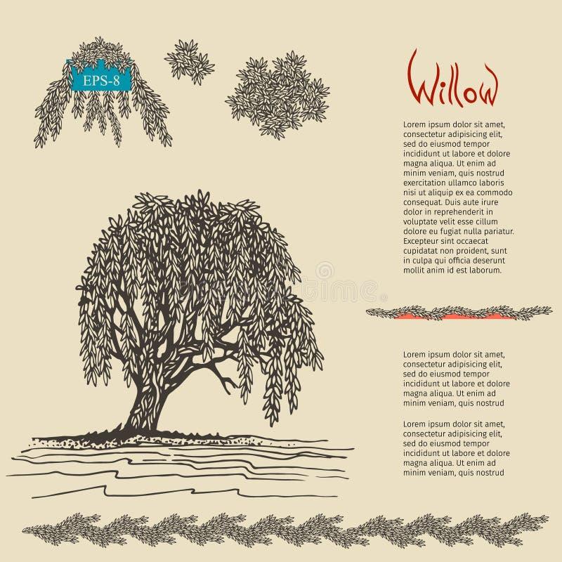Hand drawn decorative Willow tree. Vector illustration vector illustration