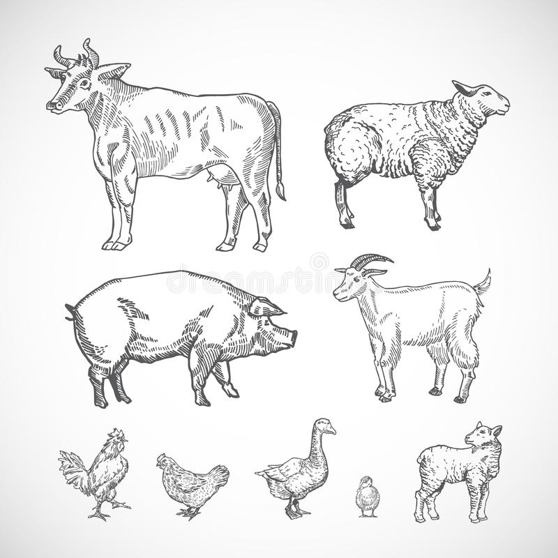 Hand Drawn Domestic Animals Set. A Collection of Pig, Cow, Goat, Lamb and Birds Silhouettes. Engraving Style Drawings. Isolated vector illustration