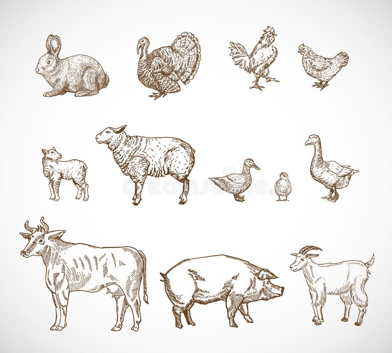 Hand Drawn Domestic Animals Set. A Collection of Pig, Cow, Goat, Lamb and Birds Sketch Silhouettes. Engraving Style. Drawings. Isolated royalty free illustration