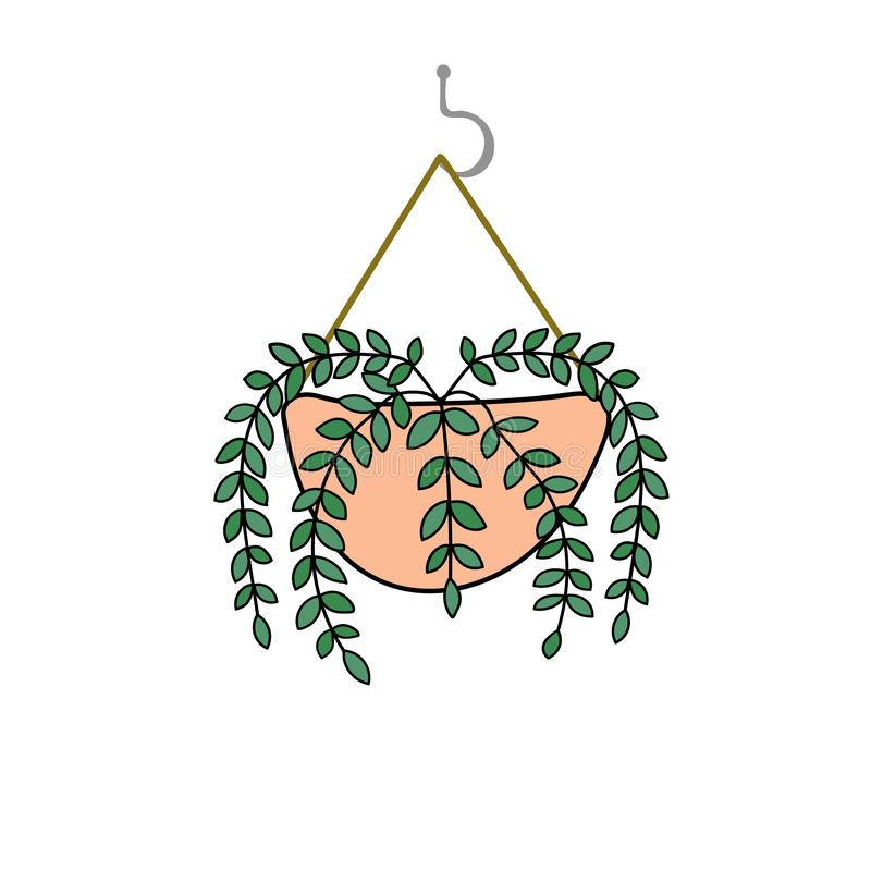 Hand drawn doodle vector drawing of potted lipstick vine plant in pink pot hanging on hook. Interior decoration urban jungle vector illustration