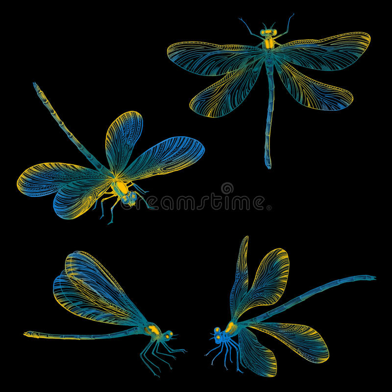 Hand drawn dragonflies set. stock photo