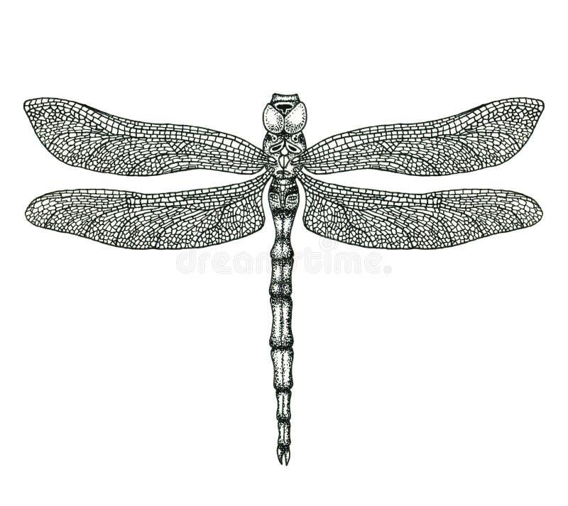 Hand-drawn dragonfly illustration royalty free illustration