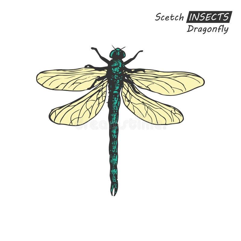 Hand drawn dragonfly stock illustration