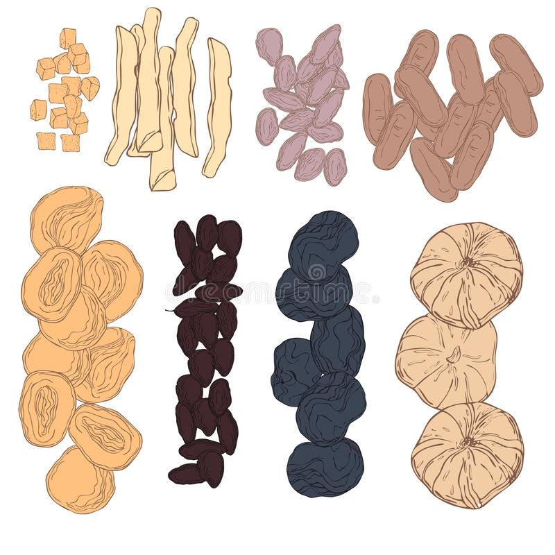 Hand drawn dried fruits. Vector   illustration stock illustration