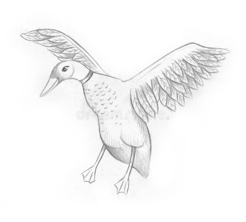 Hand drawn - duck stock image