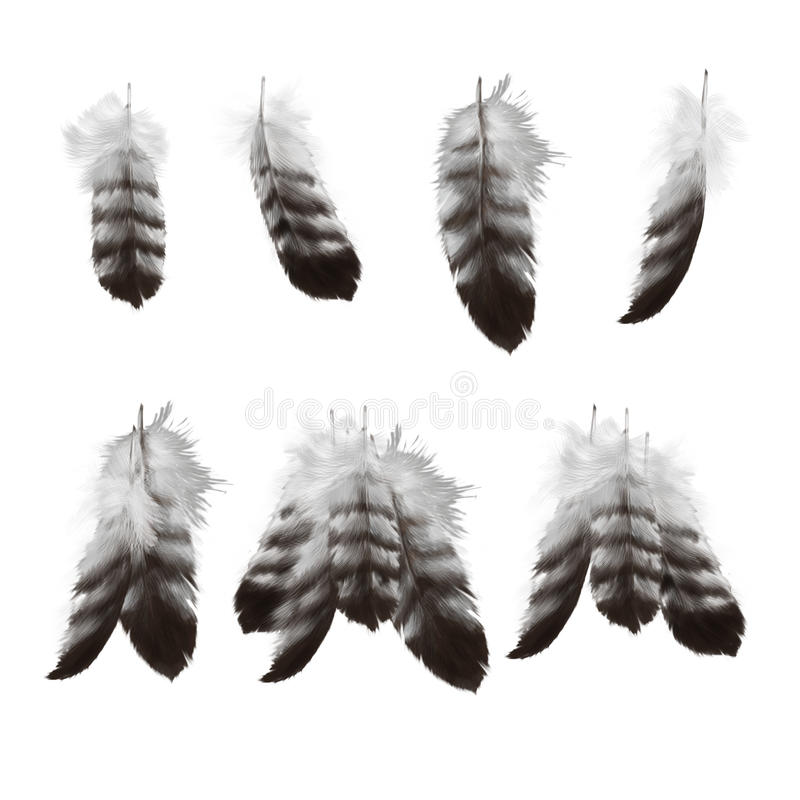 Download Hand Drawn Eagle Feathers Set Stock Illustration - Illustration of isolated, stripes: 15262708