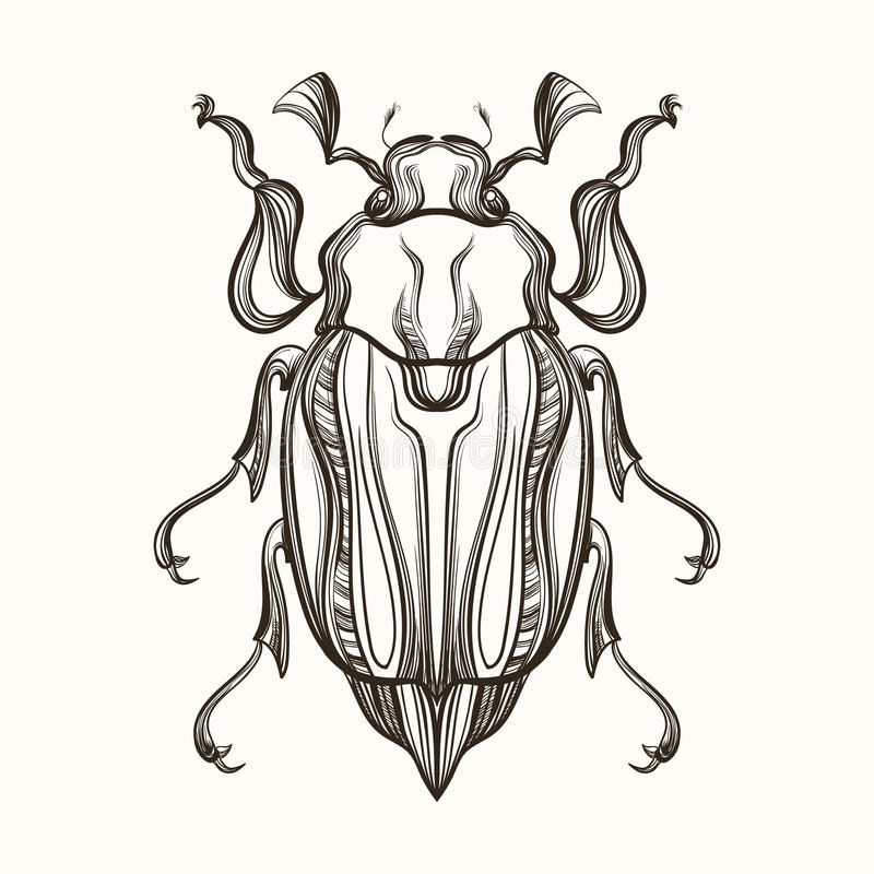Hand drawn engraving Sketch of Beetle, May bug. Vector illustra. Tion for tattoo and handmade decorative brooch vector illustration