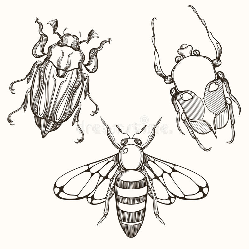 Hand drawn engraving Sketch of Scarab Beetle, May bug and Bee. D vector illustration