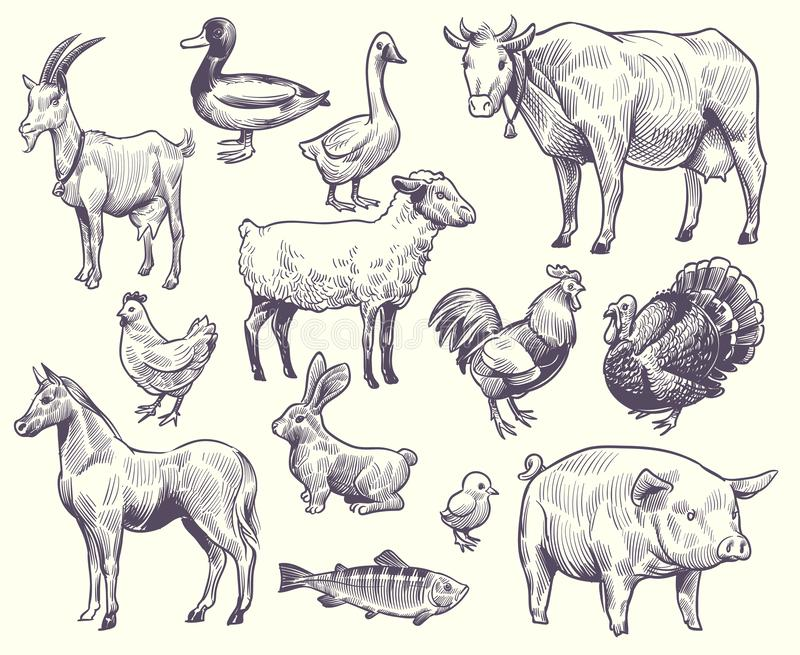 Hand drawn farm animals and birds. Goat, duck and horse, sheep and cow, pig and rooster, rabbit and turkey, chicken and. Fish, goose isolated sketches vector stock illustration