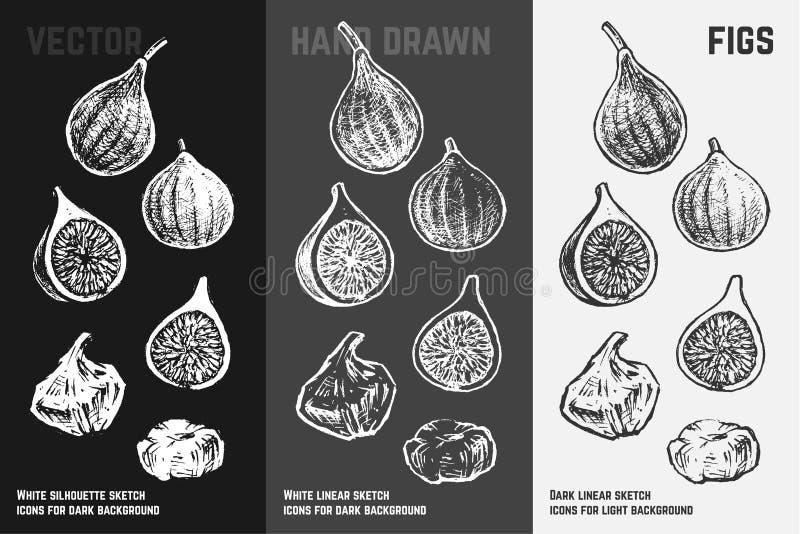 Hand drawn fig icons. Vector illustration vector illustration