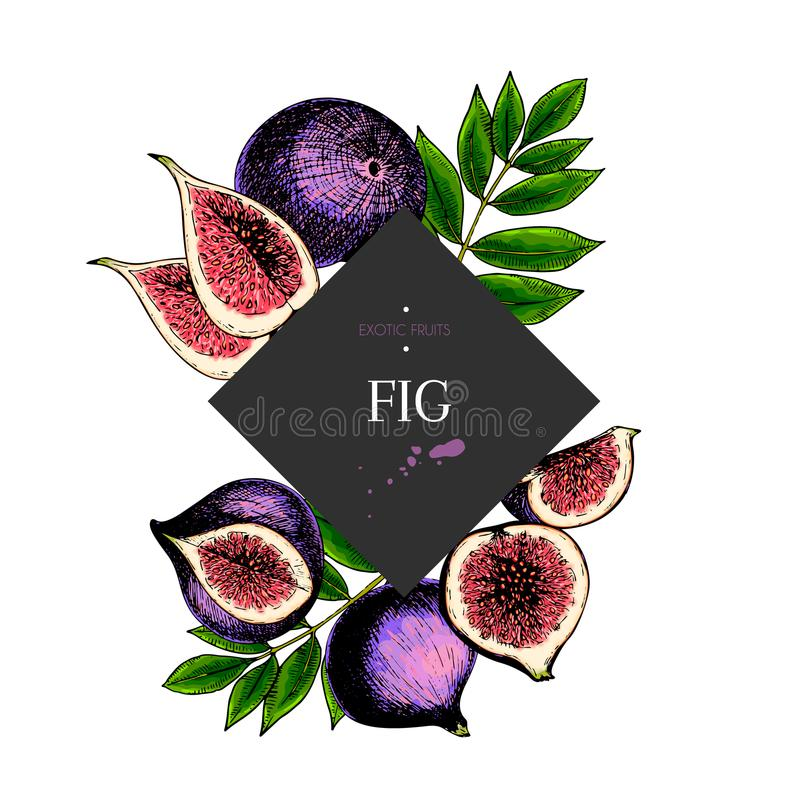 Hand drawn fig whole, sliced, half with leaves in design template. Colored engraved illustration. Square stylish frame vector illustration