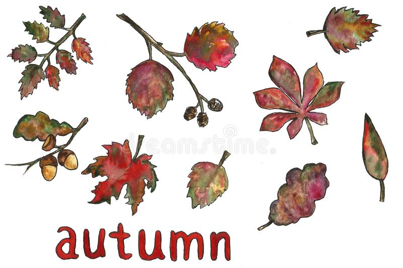 Hand drawn floral botanical watercolor illustration of a single set frame leaf branch isolated. Autumn, fall, leaf fall. stock images