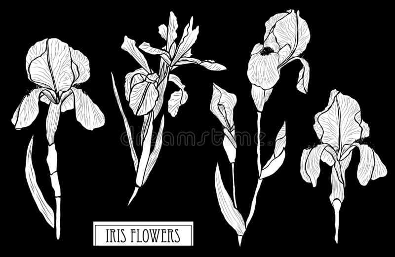 Hand drawn floral decorations vector illustration
