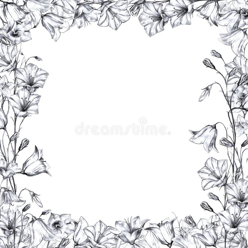 Hand drawn floral square frame with gray, black and white graphic bluebell flowers on white background. Hand drawn floral square frame with gray, black and white royalty free illustration