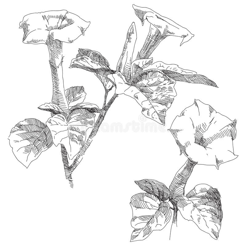 Hand drawn flower. Beauty hand drawn vector flower royalty free illustration