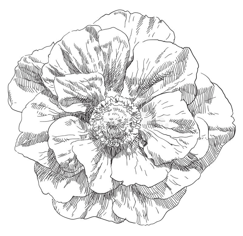 Hand drawn flower royalty free illustration