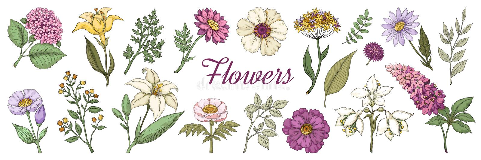 Hand drawn flowers. Floral vintage bouquet, garden flower set for posters and wedding cards. Vector doodle nature vector illustration