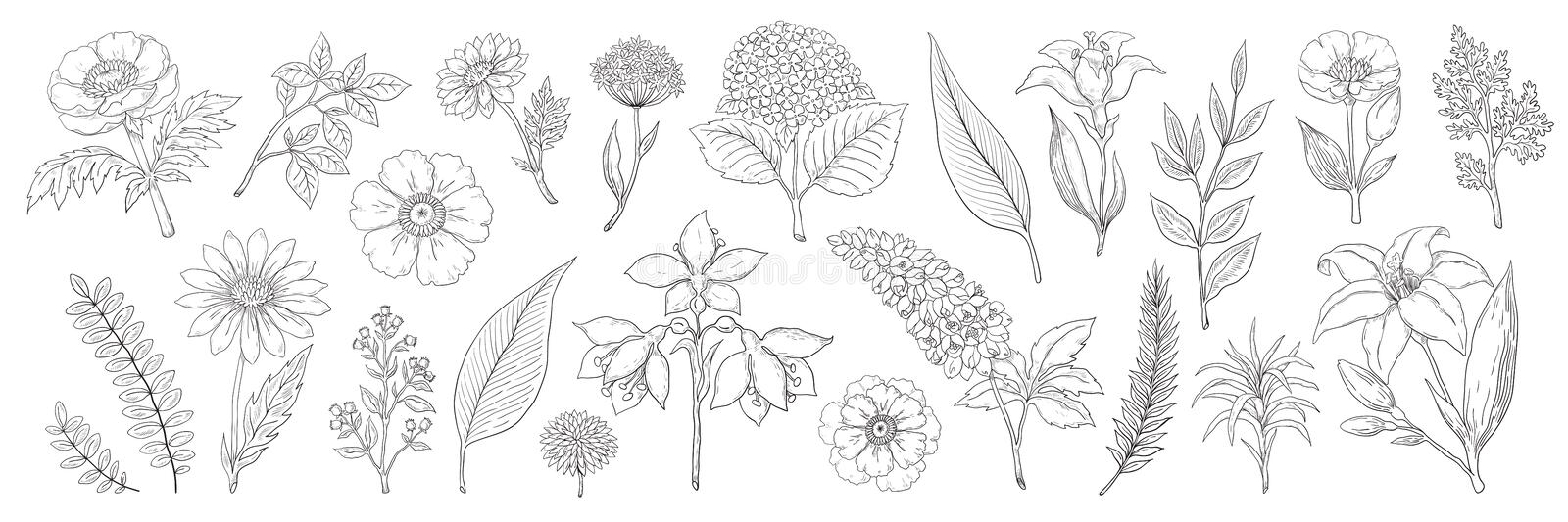 Hand drawn flowers. Vintage floral sketch, summer leaves branches and herbs collection. Vector foliage and bouquet. Hand drawn flowers. Vintage floral sketch vector illustration