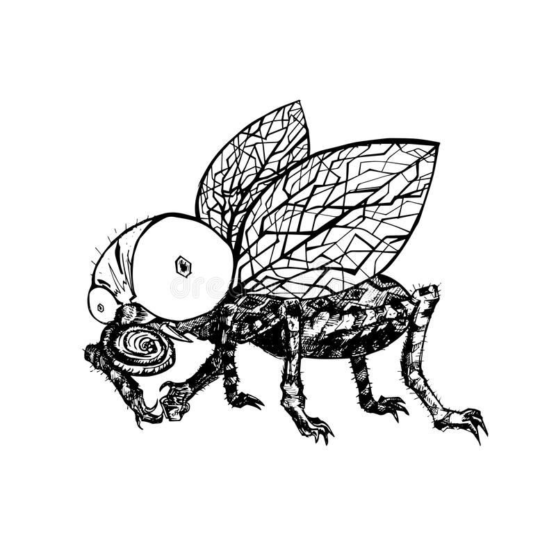 Free Hand Drawn Fly. Black And White Vector Illustration Stock Photography - 89776342