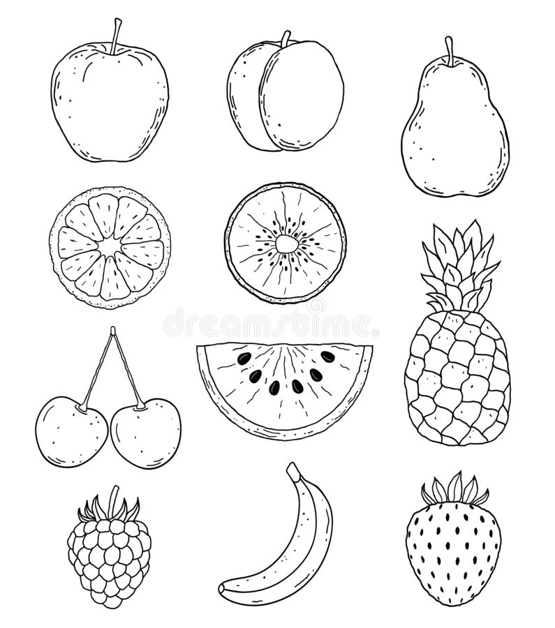 Hand drawn fruits royalty free illustration