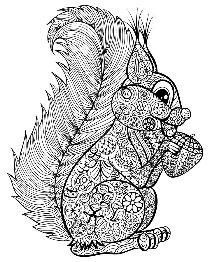 Hand drawn funny squirrel with nut for adult anti stress Colori. Ng Page with high details isolated on white background, illustration in zentangle style. Vector stock illustration