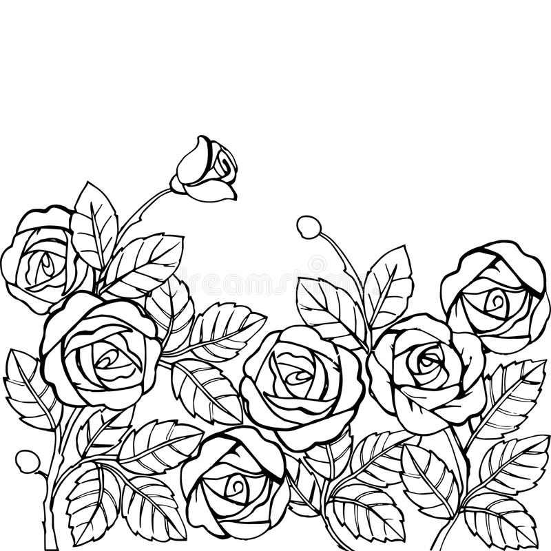 Hand drawn garden of roses for the anti stress coloring page. Vector illustration stock illustration