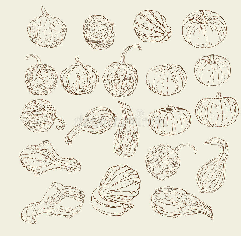 Hand Drawn Gourd and Pumpkins. Vector collection of hand drawn fall / winter gourds and squash sketches vector illustration