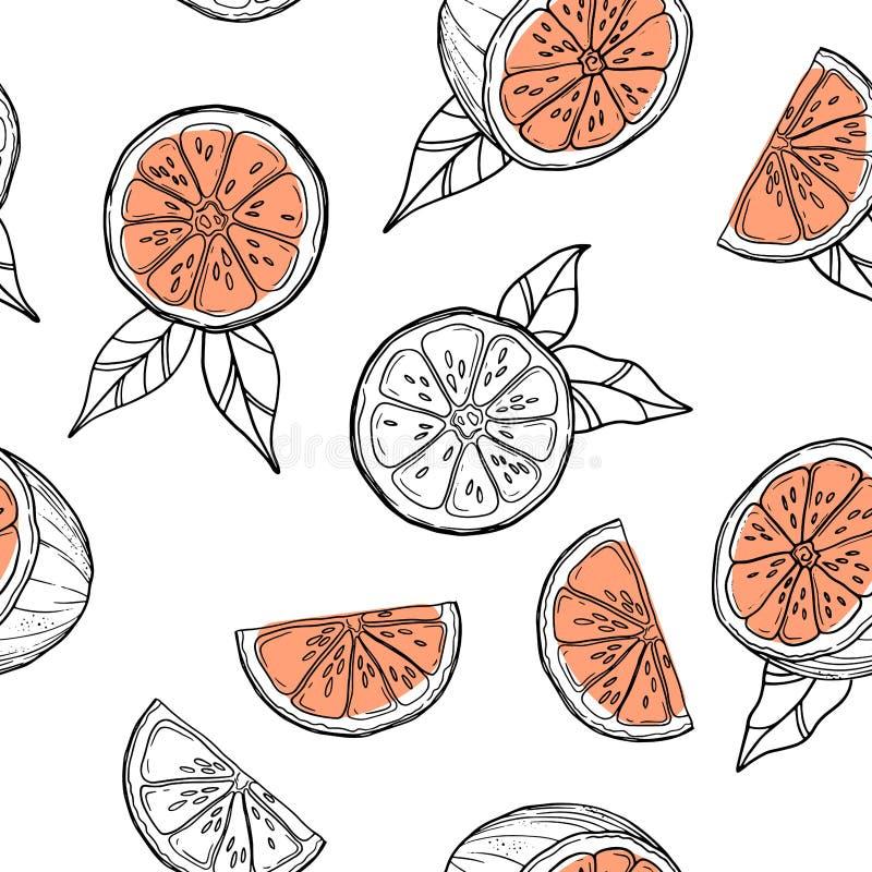 Hand drawn grapefruits, oranges pattern on white background. Hand drawn grapefruits, oranges pattern on white background vector illustration