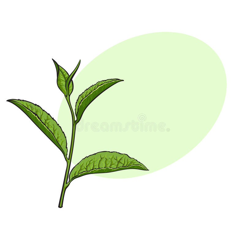 Hand drawn green tea leaf side view sketch vector illustration download hand drawn green tea leaf side view sketch vector illustration stock vector thecheapjerseys Image collections