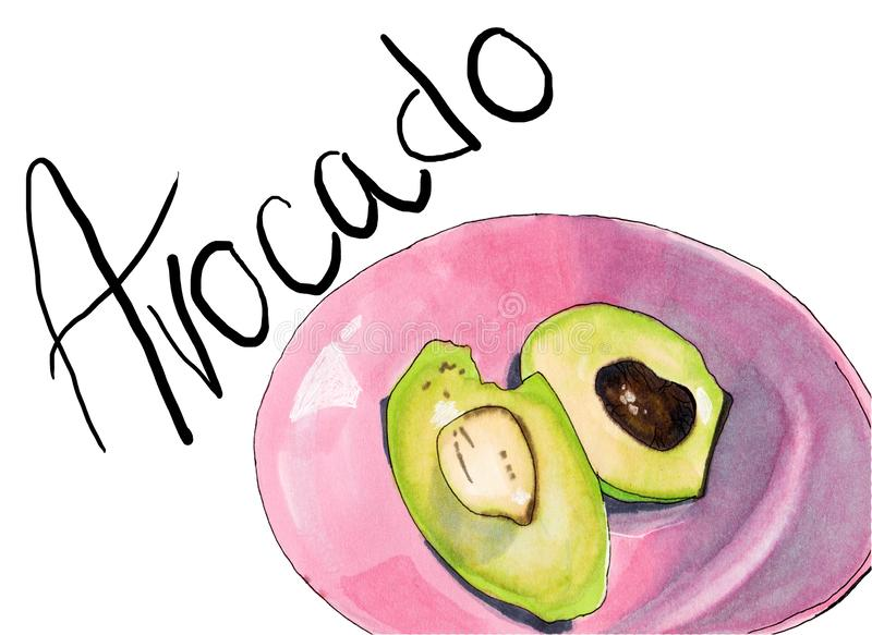 Hand drawn half avocado illustration. Natural orgainc vegetable. Food healthy ingredient. For cooking, cosmetic package design,. Hand drawn half and sliced stock illustration