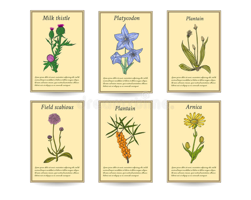 Hand drawn healing herbs sale tag banners. stock photos
