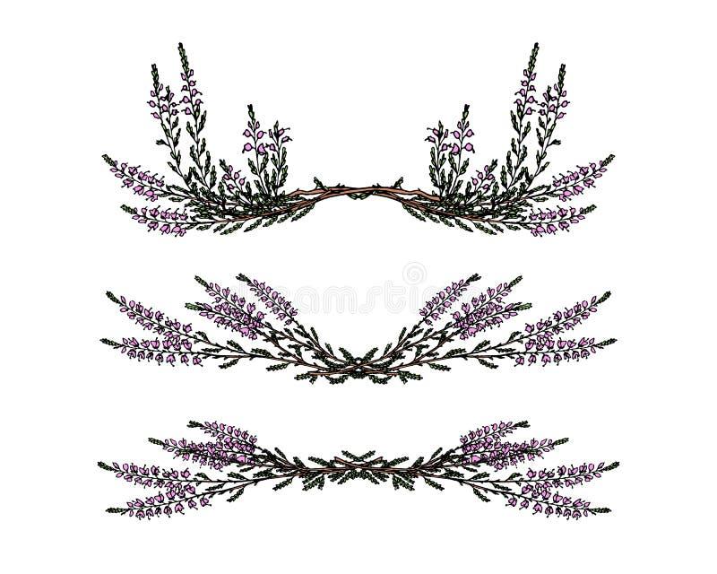 Hand drawn heather royalty free stock image