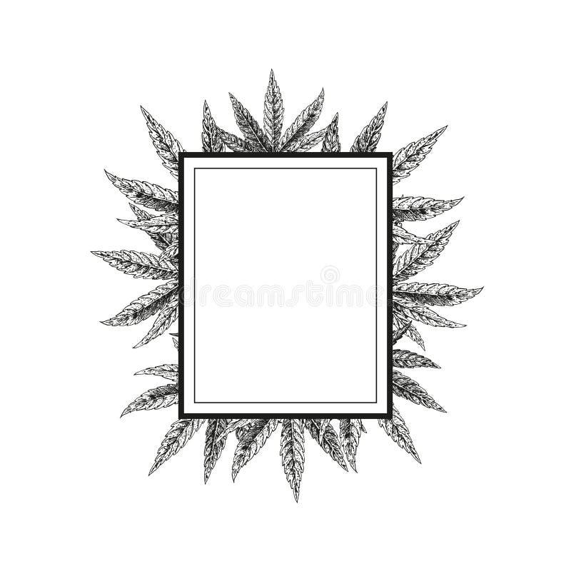 Hand drawn hemp background. Cannabis leaf. Vector sketch of marijuana. Layout design for packaging royalty free illustration