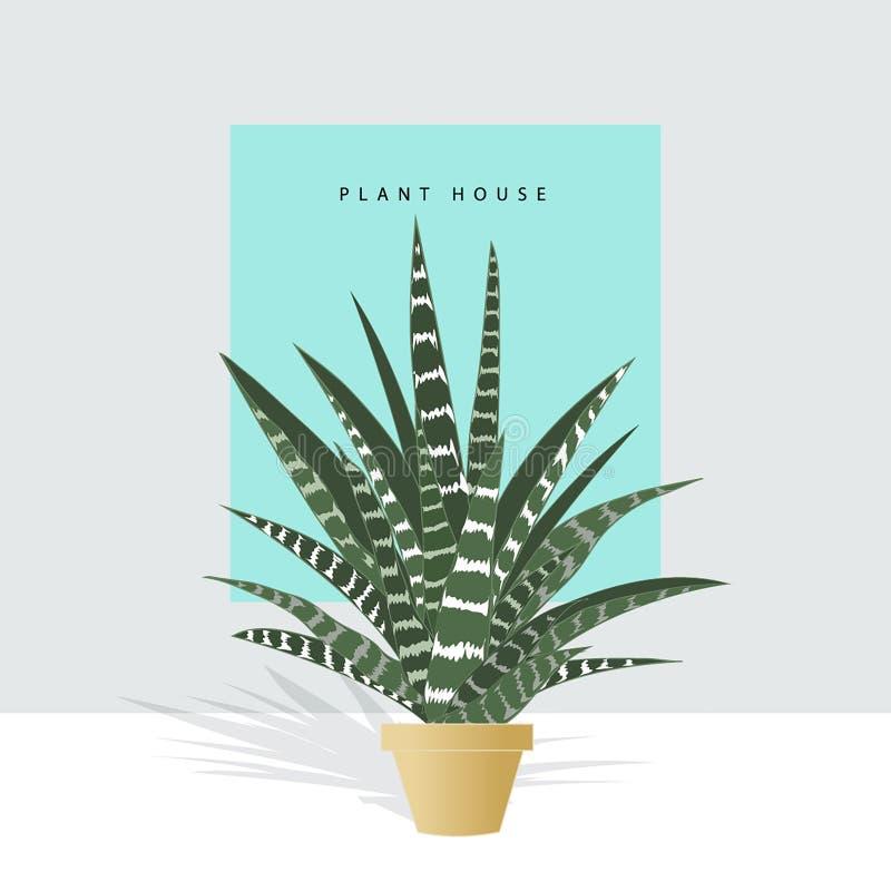 Hand drawn house plants. Scandinavian style. royalty free illustration