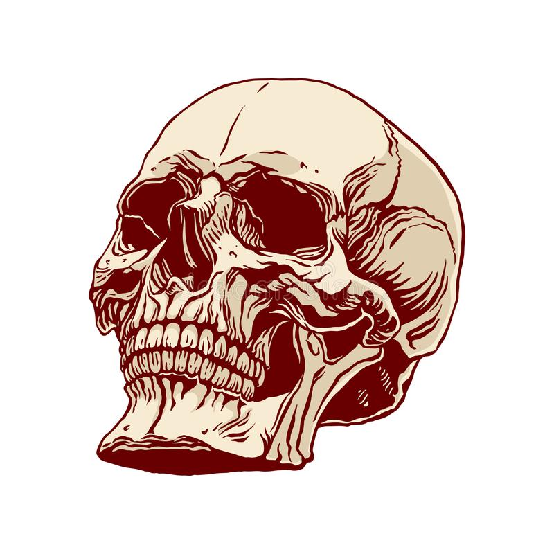 Hand drawn human skull royalty free illustration