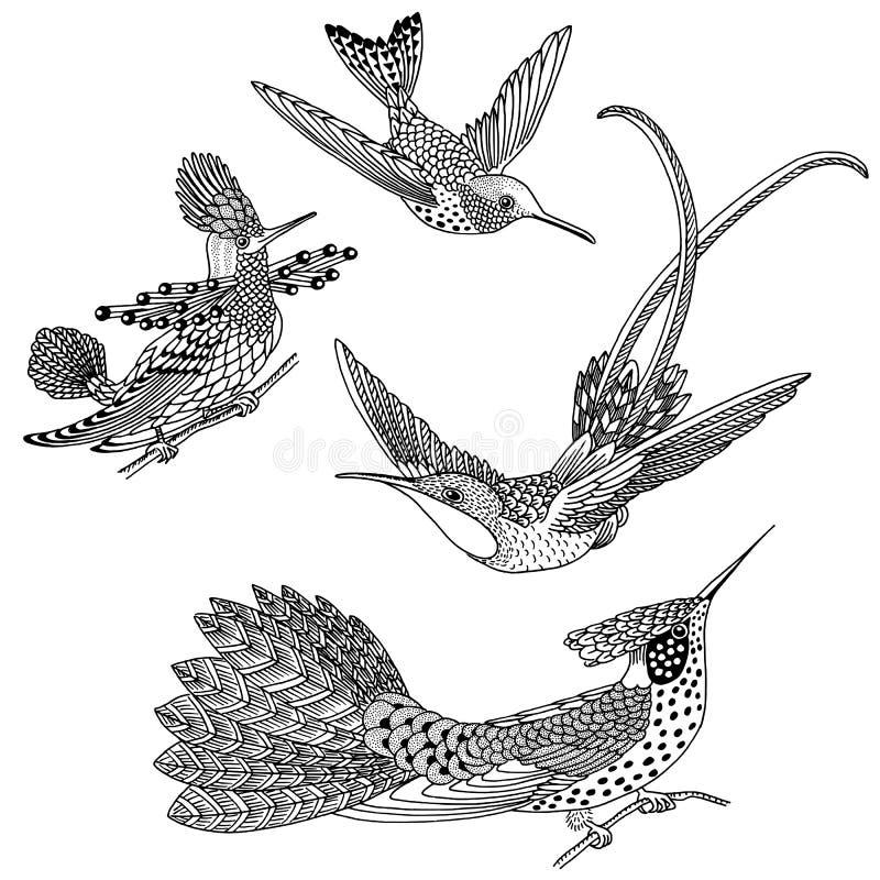 Hand drawn hummingbirds vector illustration