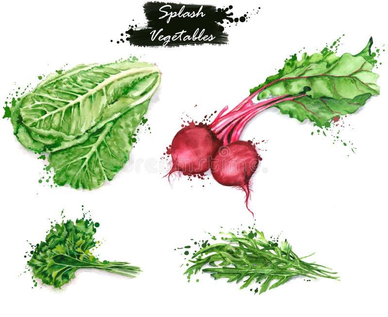 Hand-drawn illustraties van het waterverfvoedsel Geïsoleerde tekeningen van de verse groenten - sla, rode biet, peterselie en aru royalty-vrije illustratie