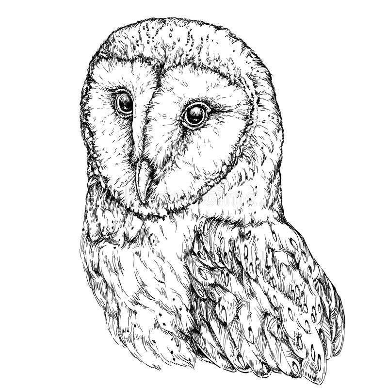 Hand Drawn Illustration of Barn Owl. royalty free illustration