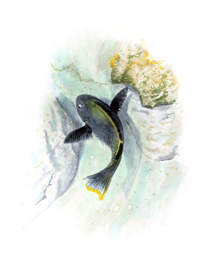 Hand drawn illustration with black coral fish stock illustration