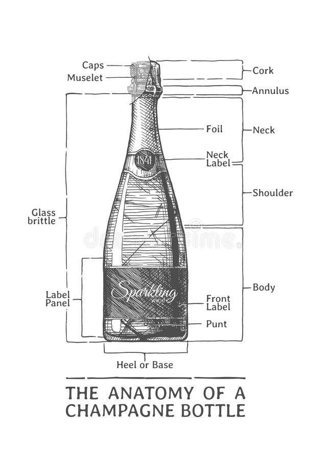 Hand drawn Illustration of Champagne bottle royalty free illustration