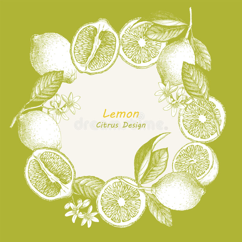 Hand drawn illustration with citrus fruits. Vector lemon vector illustration