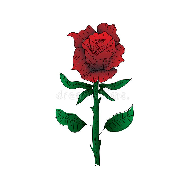 Free Hand Drawn Illustration Design Rose Flower Isolated Royalty Free Stock Photos - 199701478