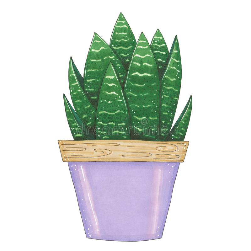 Hand drawn illustration with green succulent stock illustration