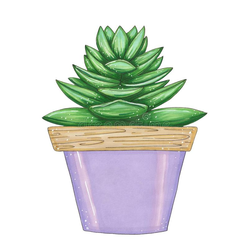 Hand drawn illustration with green succulent royalty free illustration