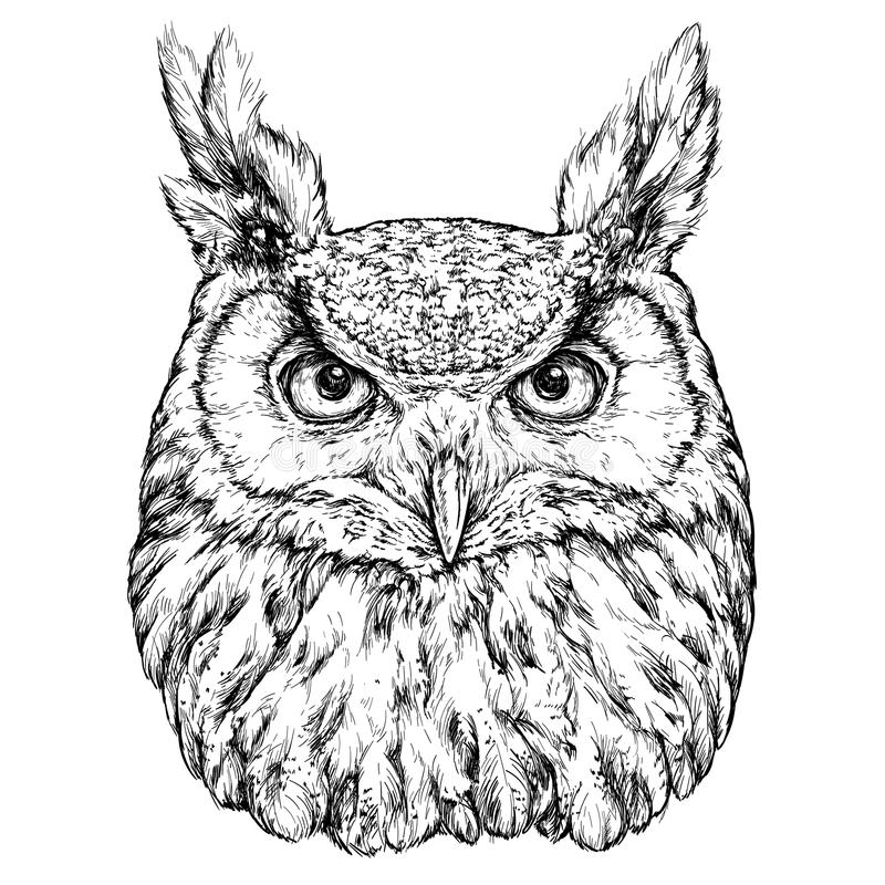 Hand Drawn Illustration of Owl stock illustration