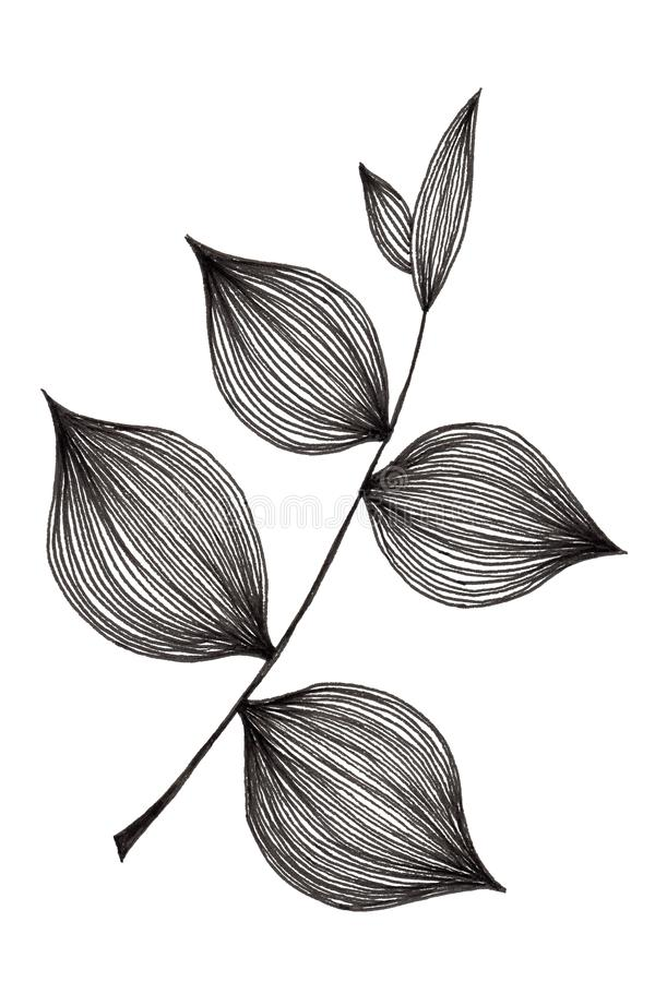 Hand drawn illustration of simple leaf and foliage branch isolated on white background using black ink pen for design purpose. Hand drawn illustration of simple stock photography