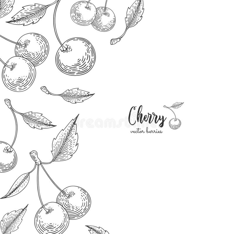 Hand drawn illustrations of cherries isolated on white background. Berries engraved style illustration. Detailed frame with cherry royalty free illustration